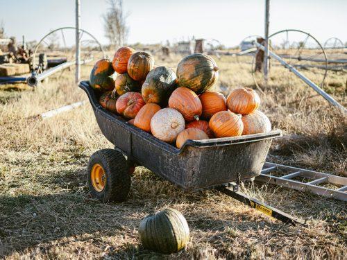 I lavori nell'orto a settembre